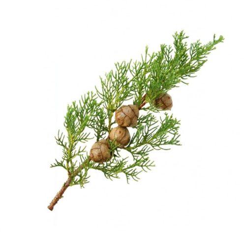 cyprus esencialny olej bio