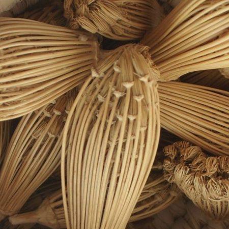 parasca khella florihana esencialny olej bio