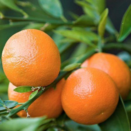 mandarinka esencialny olej bio florihana
